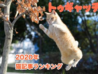 猫さんが今年も癒やしてくれました…2020年トゥギャッチ猫人気記事ランキング